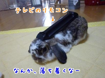 P1100138_convert_20120118202421.jpg