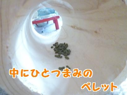 P1100333_convert_20120205154443.jpg