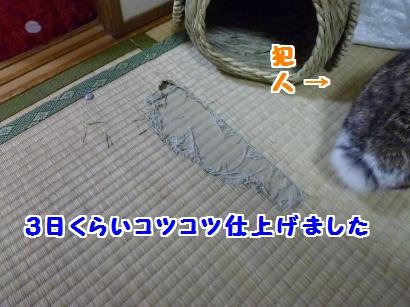 P1100396_convert_20120211210313.jpg