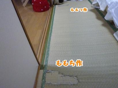 P1100401_convert_20120211210435.jpg