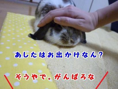 P1100531_convert_20120229075427.jpg
