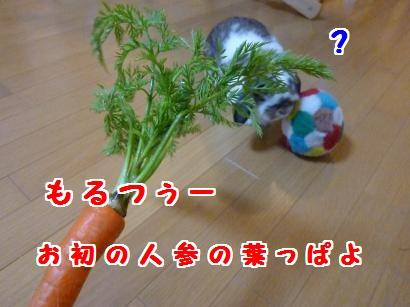 P1100657_convert_20120310075058.jpg