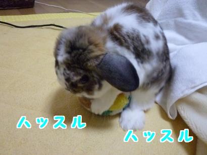 P1100793_convert_20120321195916.jpg