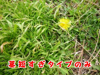 P1100849_convert_20120328123344.jpg