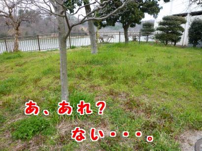 P1100850_convert_20120328123245.jpg
