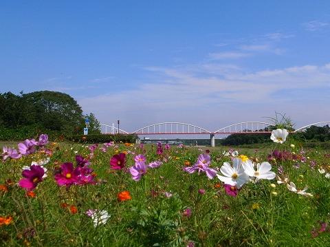 2011-09-28 秋景色 046