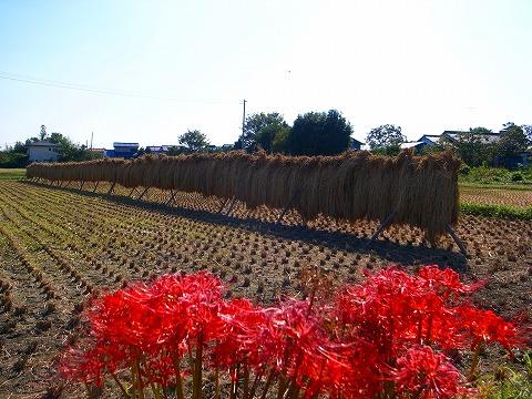 2011-09-28 秋景色 090
