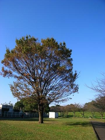 2011-10-27 秩父長瀞 005