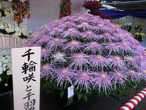 2011-11-09 川越スナップ 056