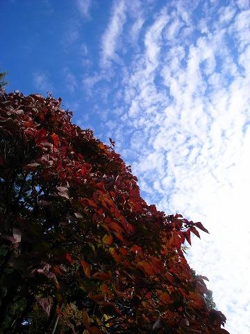 2011-11-09 川越スナップ 037