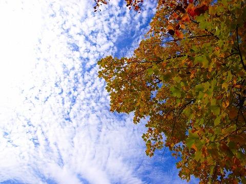 2011-11-09 川越水上公園 008