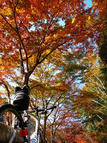 2011-11-24 鎌北湖 050