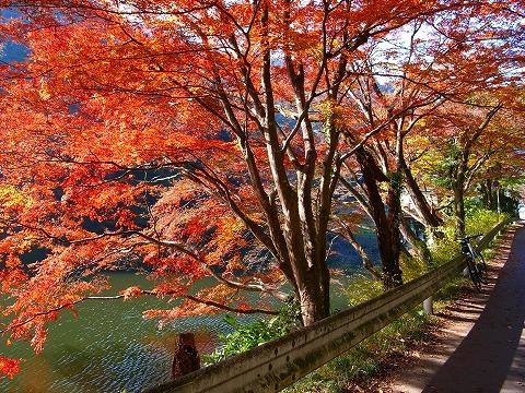 2011-11-24 鎌北湖 069
