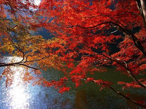 2011-11-24 鎌北湖 063