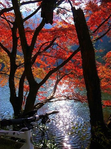 2011-11-24 鎌北湖 074