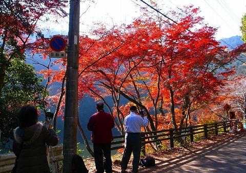 2011-11-24 鎌北湖 038
