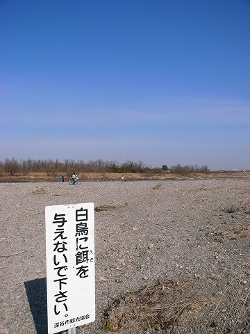 2012-01-18 川本白鳥 015