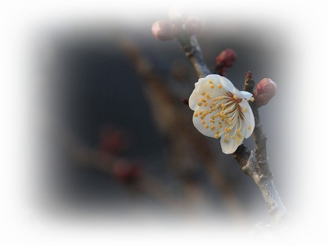 2012-02-23 川越スナップ 006