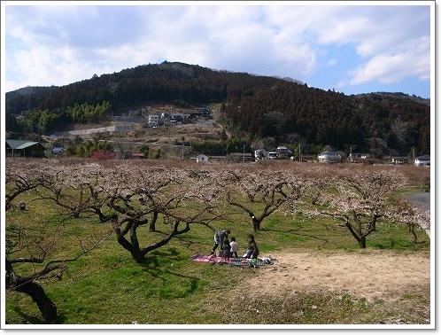 2012-03-14 青梅梅林 111