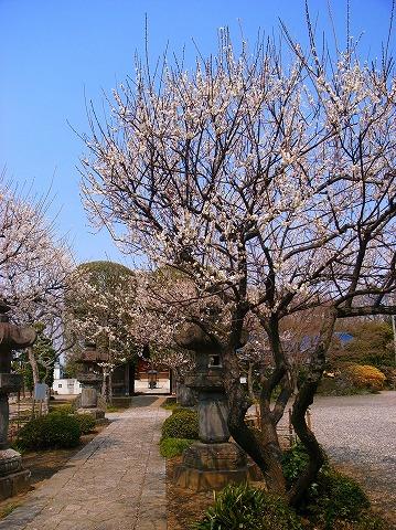 2012-03-28 常楽寺 026