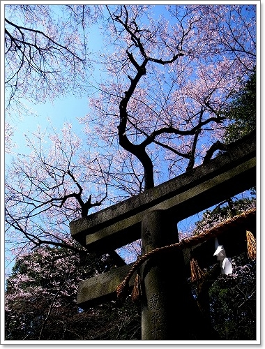 2012-04-04 川越スナップ春 054