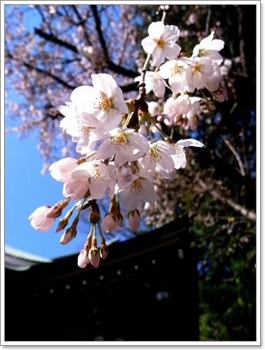 2012-04-04 川越スナップ春 005