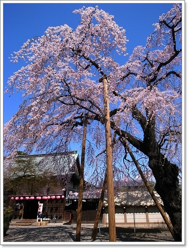 2012-04-04 川越スナップ春 078