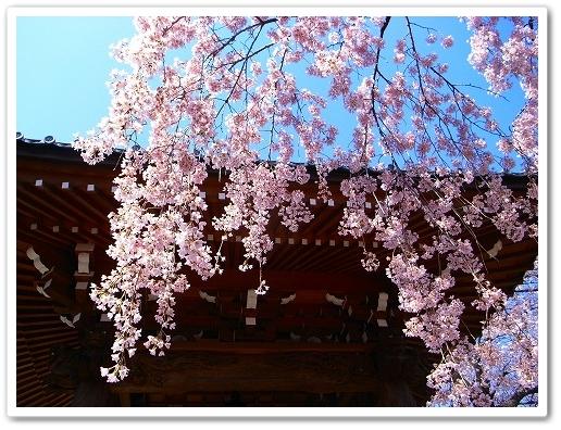 2012-04-05 川越スナップ 040