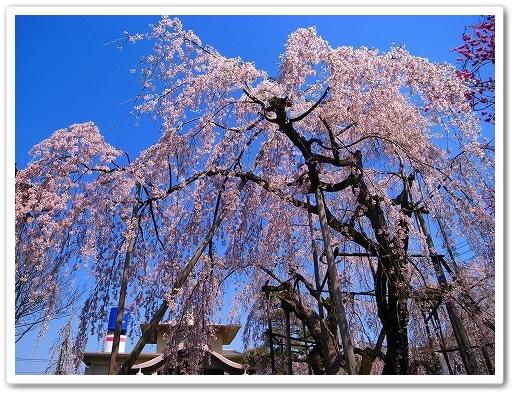 2012-04-05 川越スナップ 036