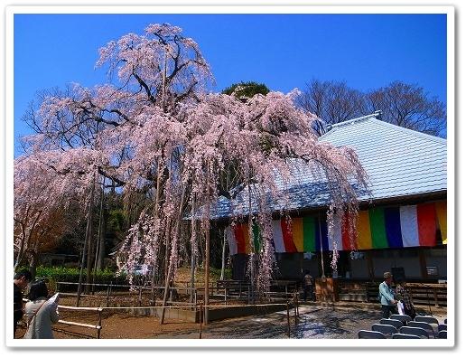 2012-04-05 川越スナップ 030
