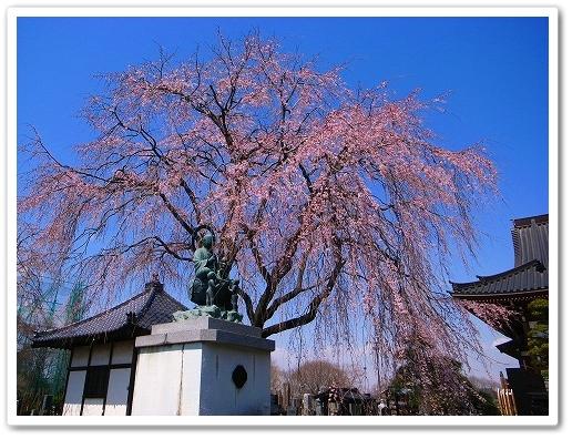 2012-04-05 川越スナップ 014
