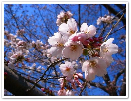 2012-04-05 川越スナップ 008