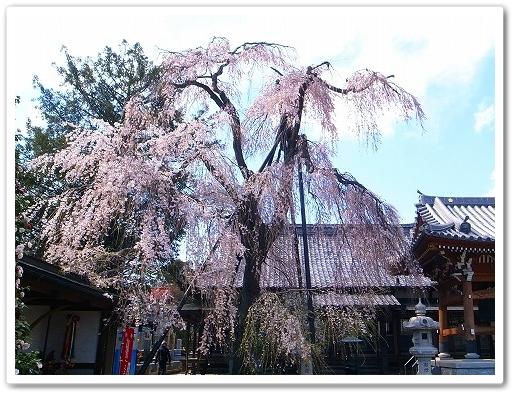 2012-04-05 川越スナップ 058