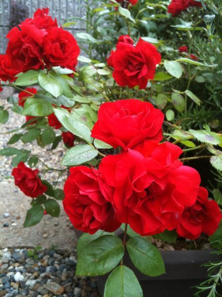 012_convert_20110606130332.jpg