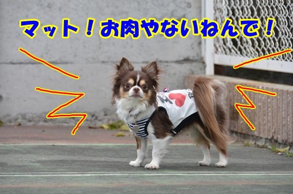 DSC_5081.jpg