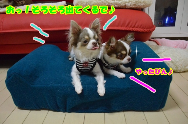 DSC_5217.jpg