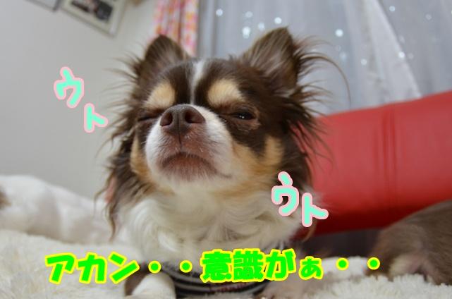 DSC_5243.jpg