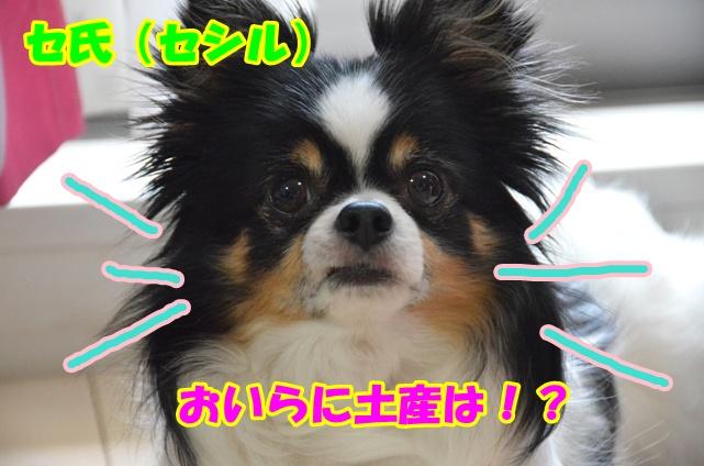 DSC_5361.jpg