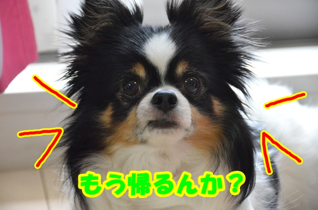 DSC_5361_20110422225848.jpg