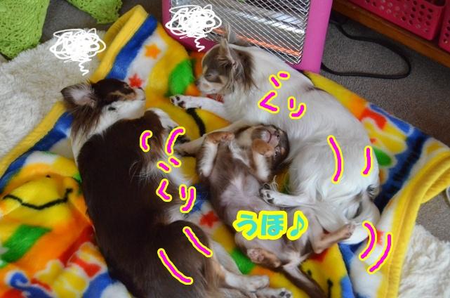 DSC_5568.jpg