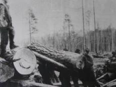 材木の伐採作業をする強制労働者