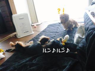 004_20080130185909.jpg