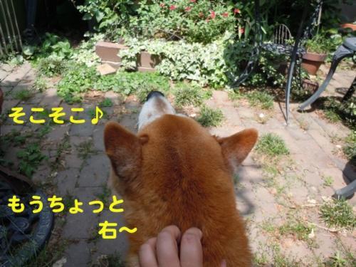 DSCN3547_20110522225611.jpg