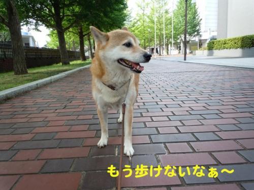 DSCN4932.jpg