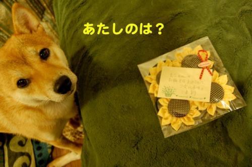 DSC_0008_20110813221326.jpg