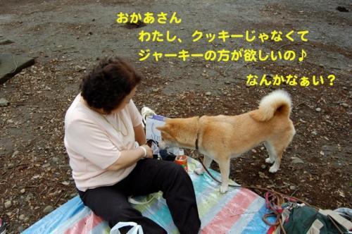 DSC_0029_20110620000809.jpg