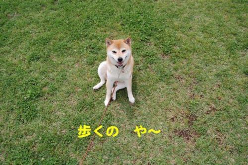 DSC_0056_20110605234047.jpg