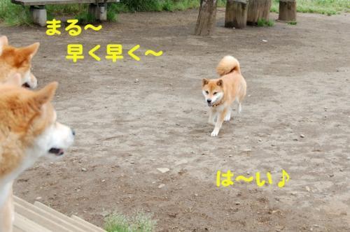 DSC_0069_20110602221301.jpg