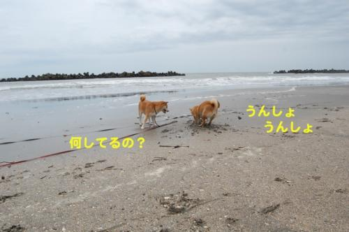 DSC_0269_20110624155144.jpg