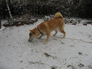 雪のお味は?